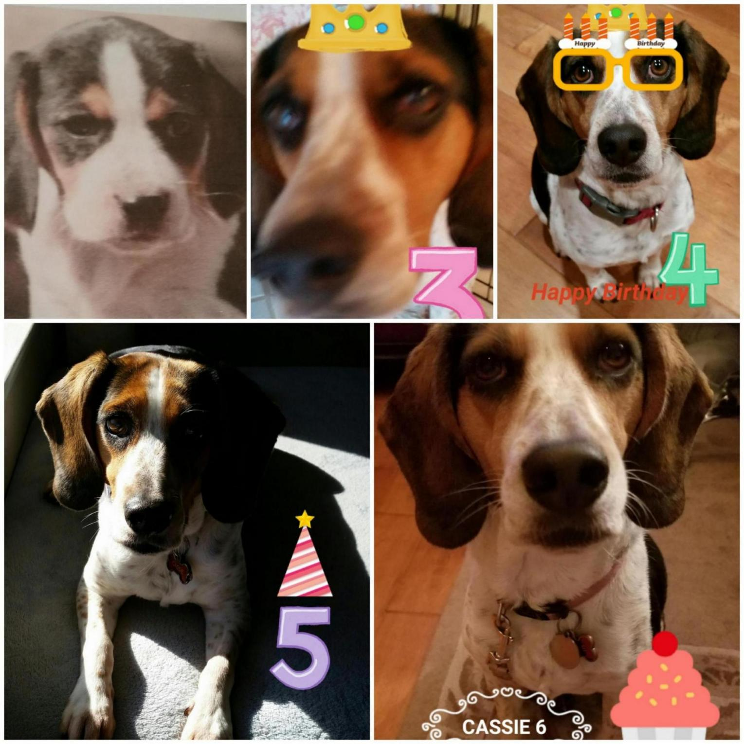 Hi To All you Crazy Beagle Parents out there-20190104_154225_1559446044923.jpg