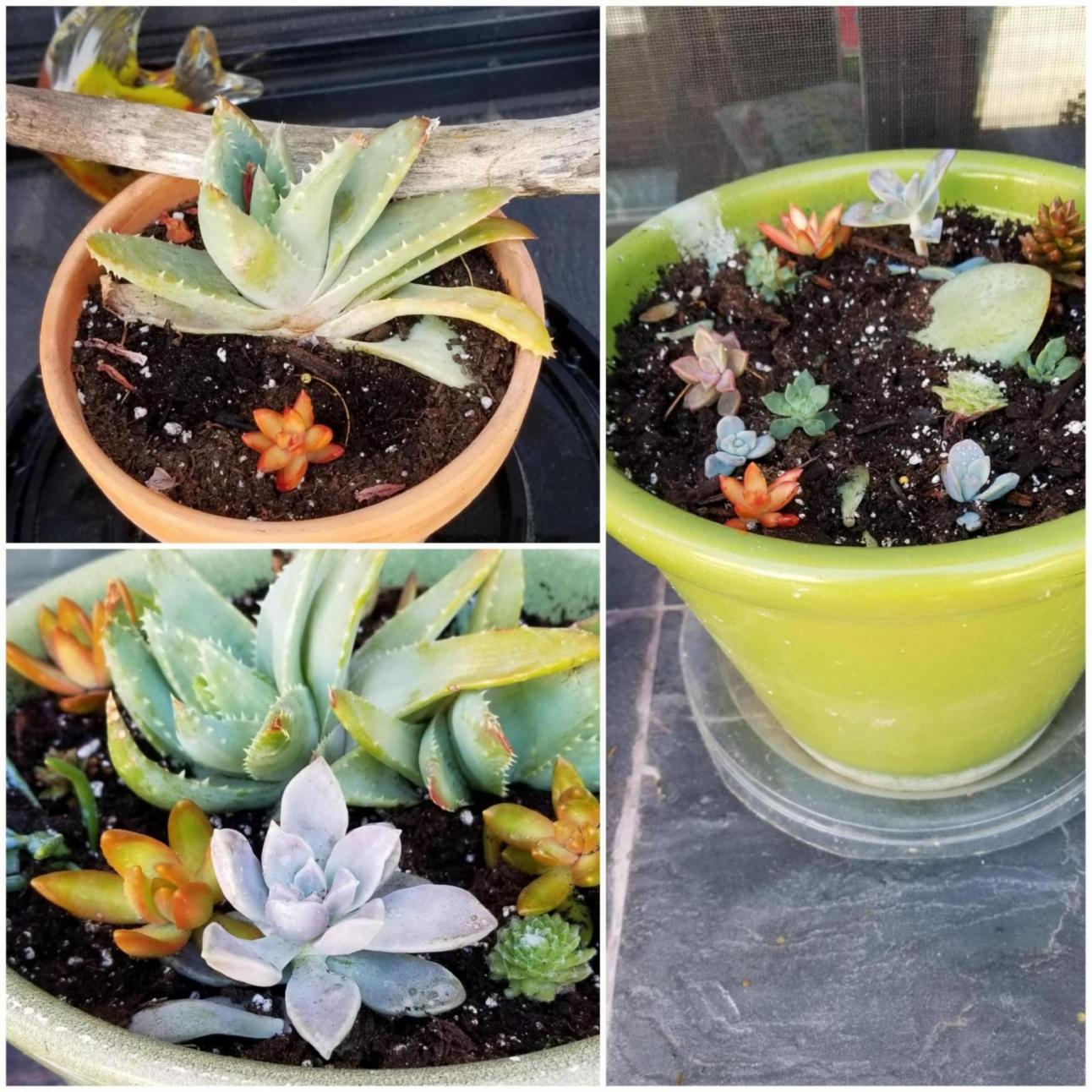 Plant smasher...grr-20190720_095512_1564325086431.jpg