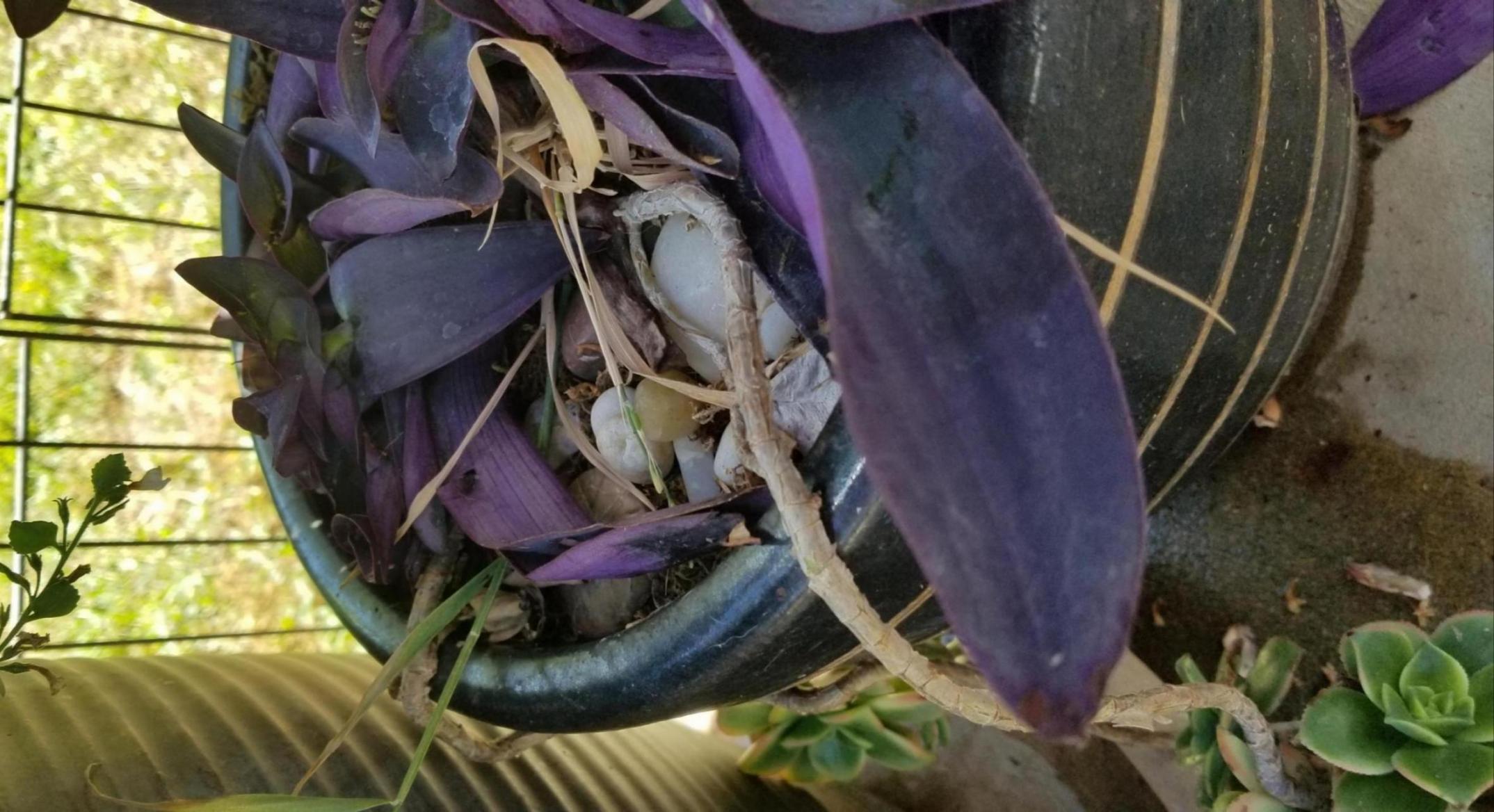 Plant smasher...grr-20190720_143152_1563658427321.jpg