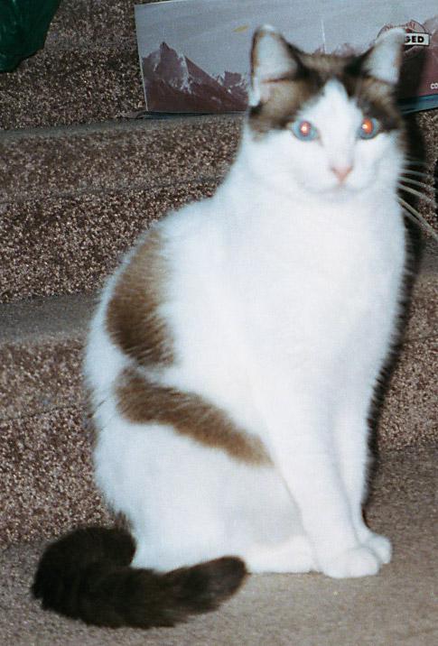 Fuzzy Kitty-3322.jpg