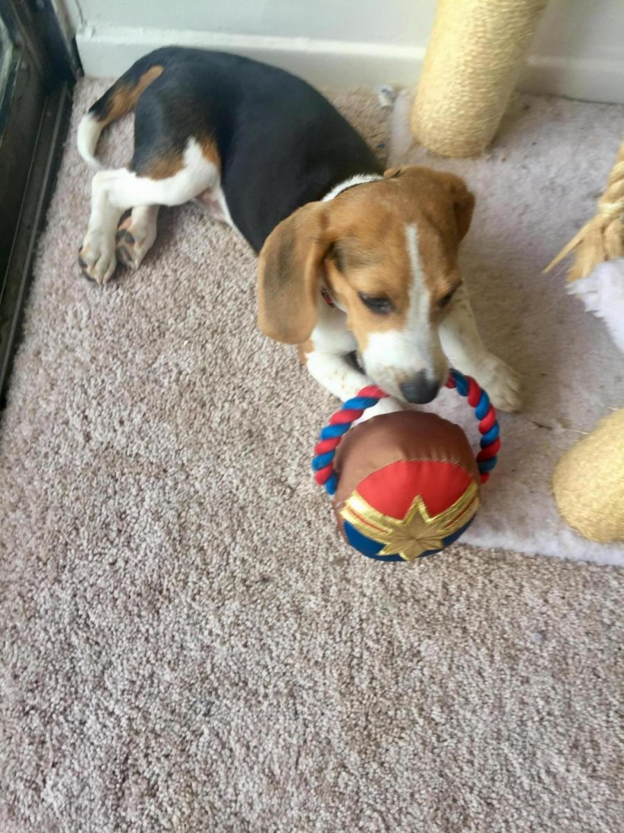 Is This Normal?-38dd848a-7ccc-4bb1-9093-198f462f1f91_1565279543845.jpg