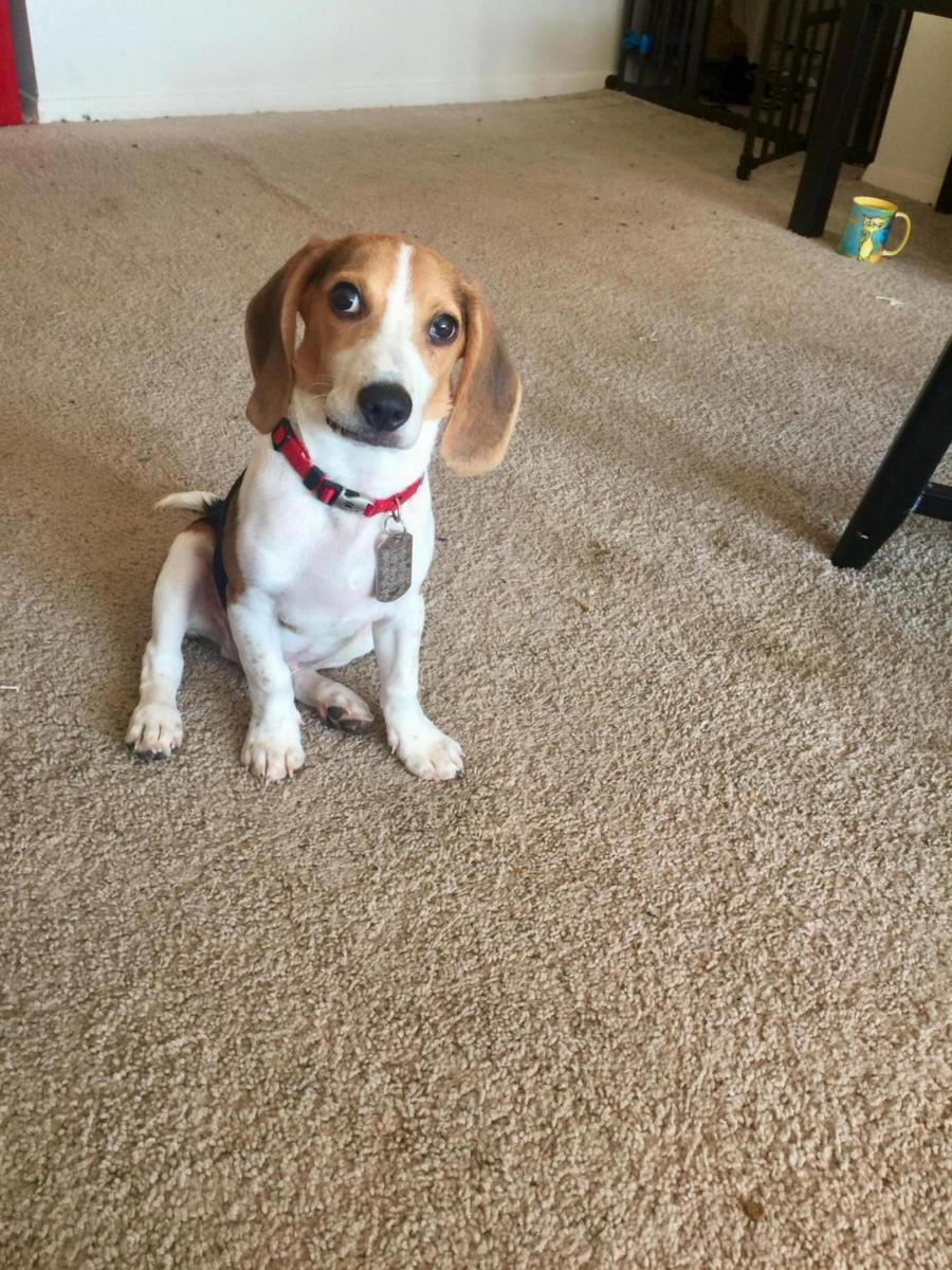 Is This Normal?-b73dfae2-c77b-426a-8a92-32fcf0f7e503_1565227792810.jpg