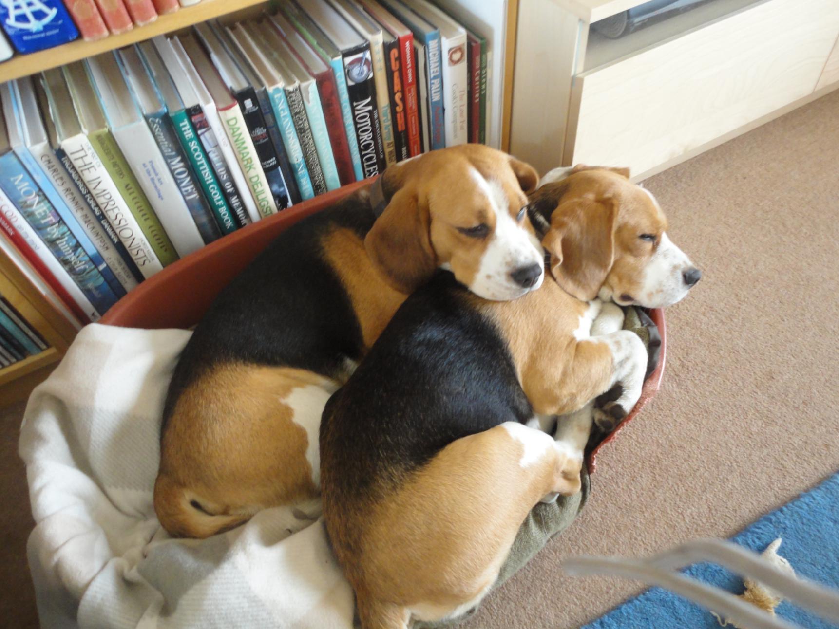 12) Puppy love-dsc04246.jpg