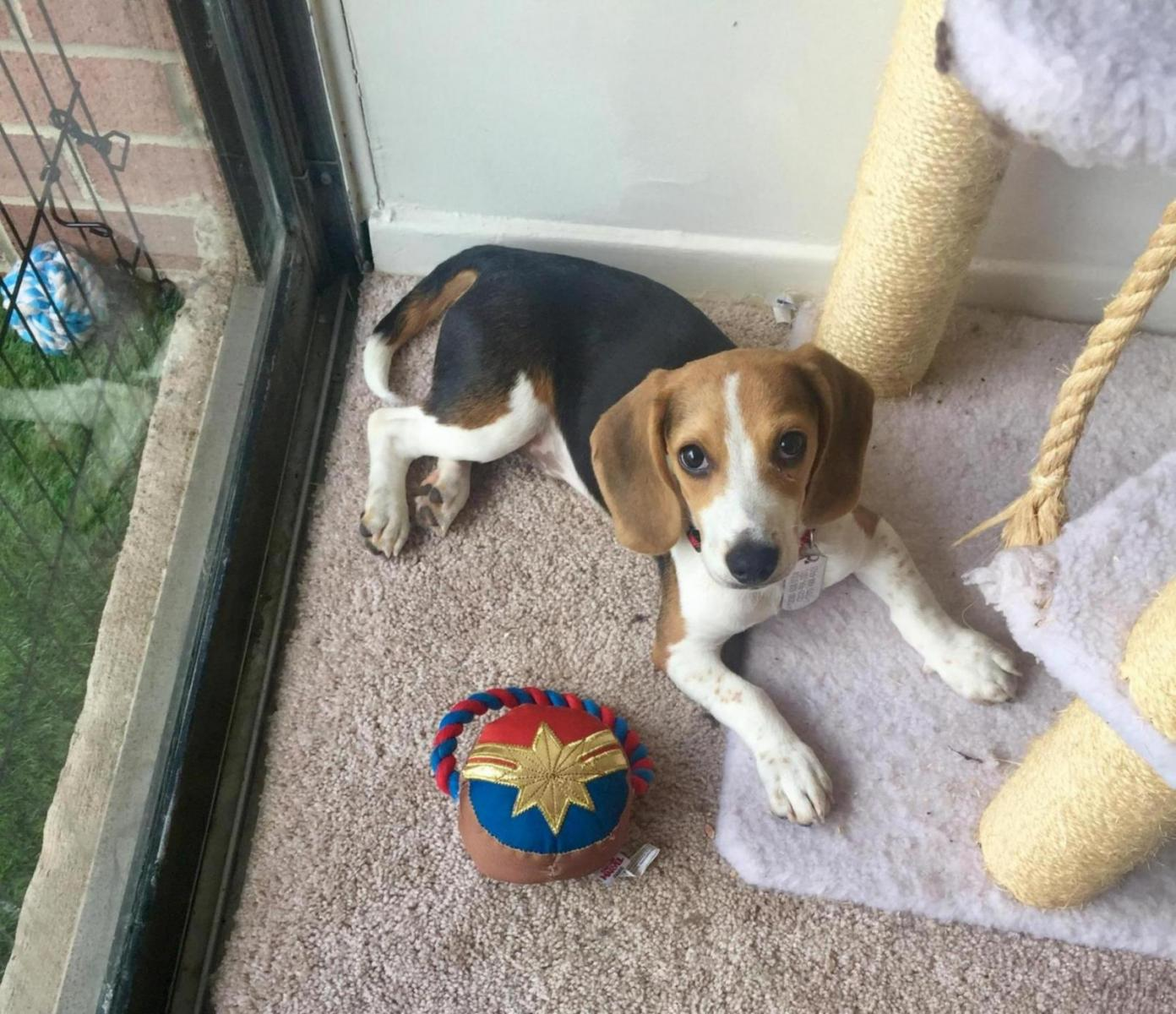 Is This Normal?-fdff2eea-b855-4f50-a890-a100cb3fb73e_1565279512238.jpg