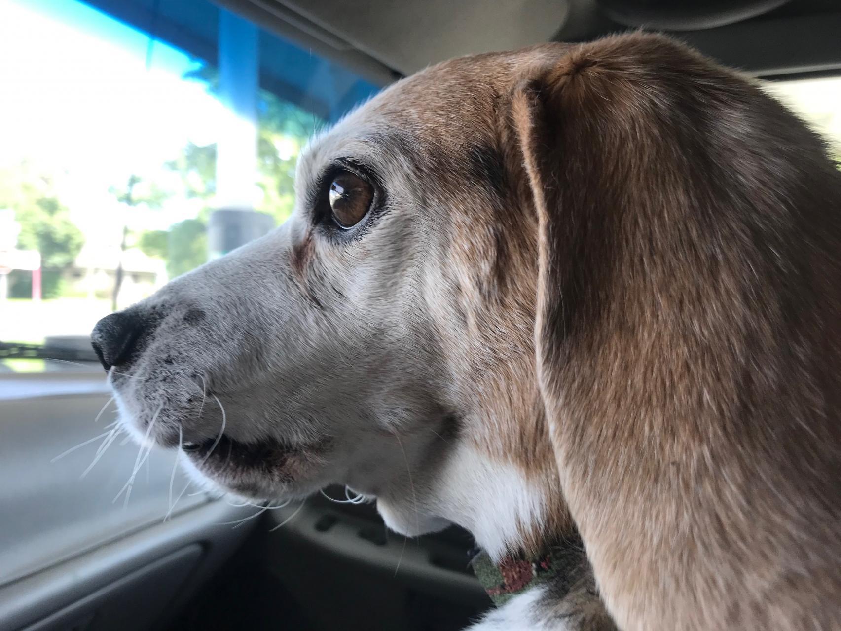 New Buddy photo-img_1716.jpg