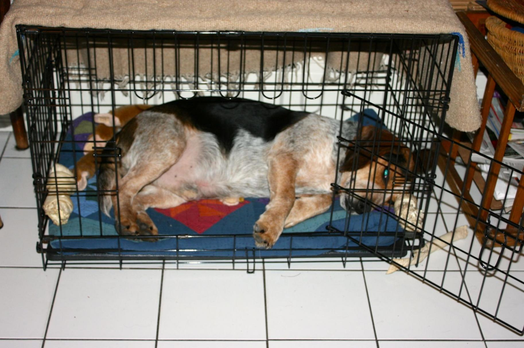 We have the HOUSEBREAKING BLUES!-new-crate.jpg