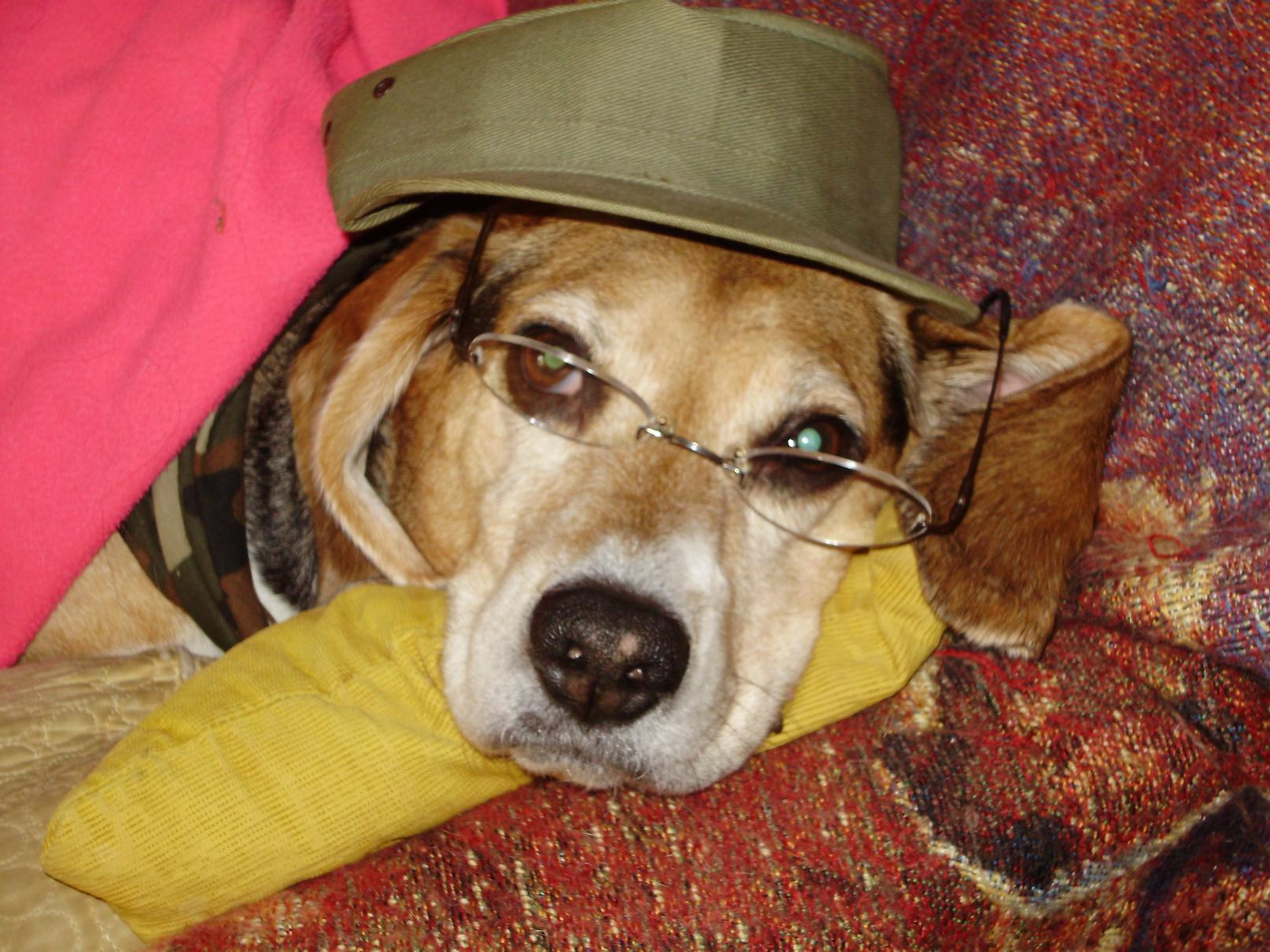 Sir Sam of Willenbaker-sam-army-hat.jpg