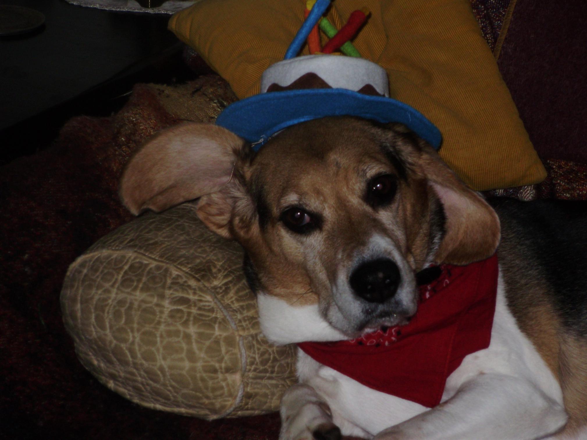 Sir Sam of Willenbaker-sam-bday-hat.jpg