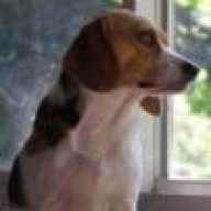 Gasping Choking Our Beagle World Forums
